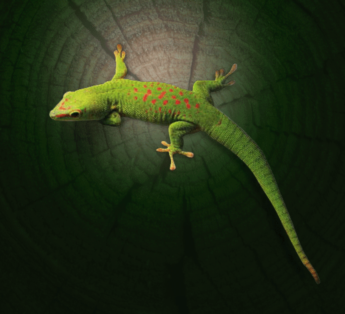 Gecko-inspired adhesives allow people to climb walls